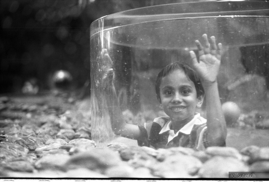 like a fish in the aquarium