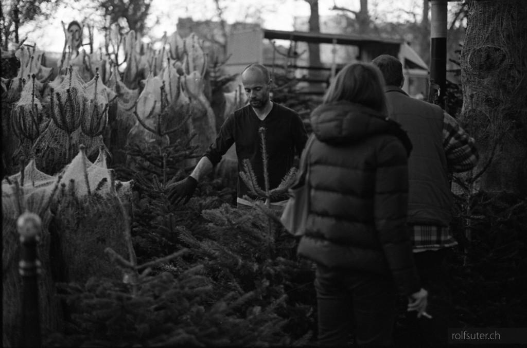 Christmas tree market in Paris