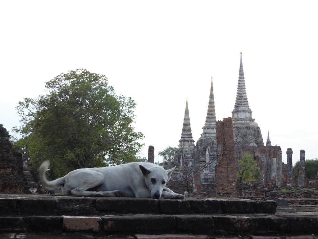 Dog and temple